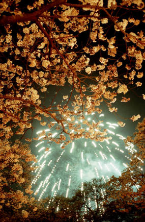 Fireworks and Cherry Blossoms
